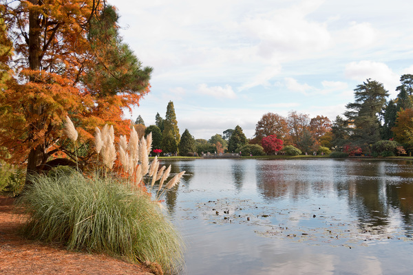Park lake in autumn