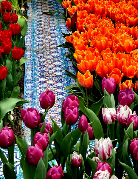 flower dome tulip display31