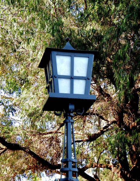light under trees1: historic wrought iron street lamp