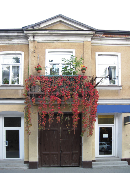 Vine on a balcony