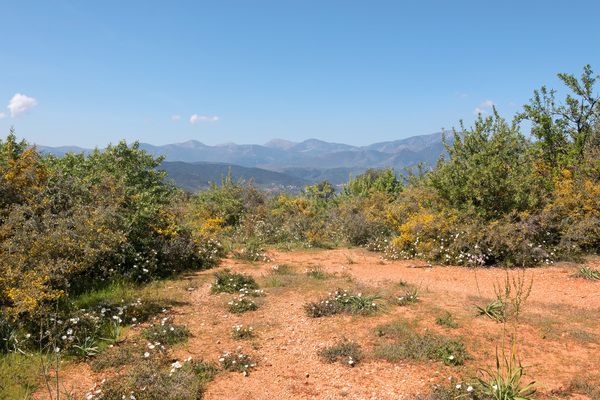 Greece landscape: Landscape of southern Greece in spring.