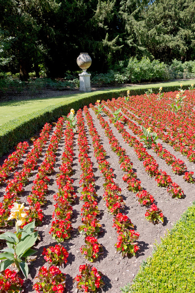 Formal flower bed