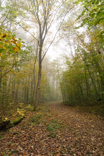 foggy autumn forest walkway