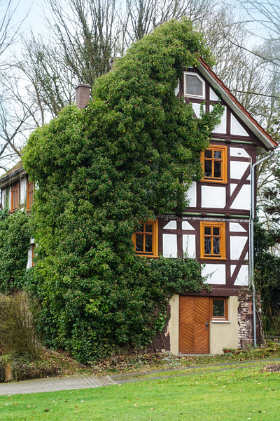 half-timbered house with ivy