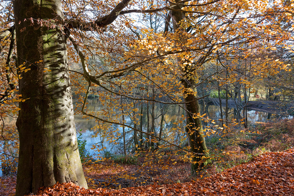 Autumn woodland and pond