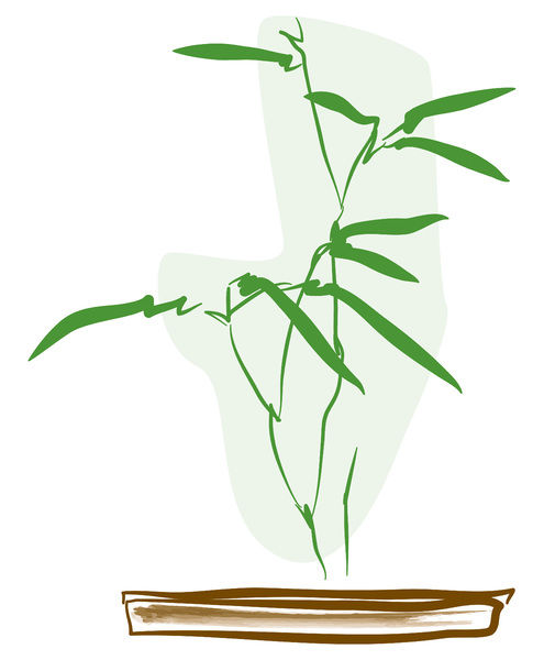 Plant bamboo illustration