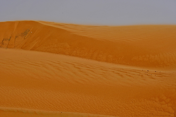 Desert Sand dunes: Desert sand dunes with scattered rocks and desert plants as the only signs of life.