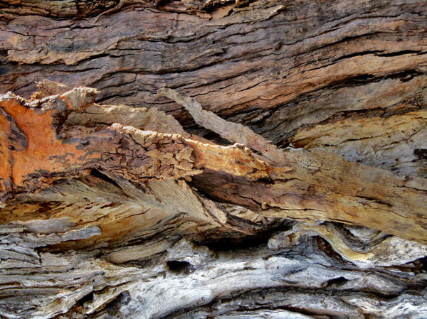textured tree trunk4