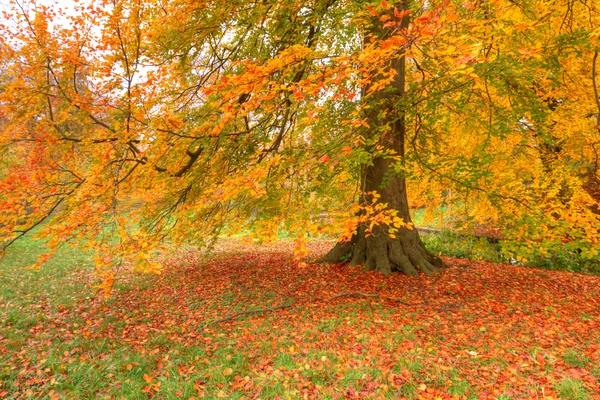 Autumn colours in the park: Tree with autumn colours in park.