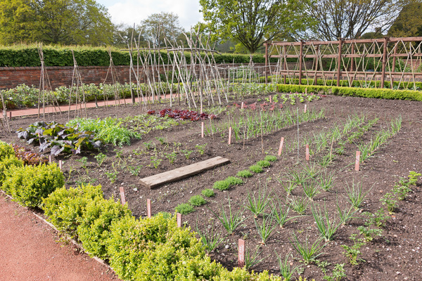 Vegetable garden in spring: A vegetable garden at Packwood House, Warwickshire, England, in spring. Photography in the grounds of this National Trust property is freely permitted.