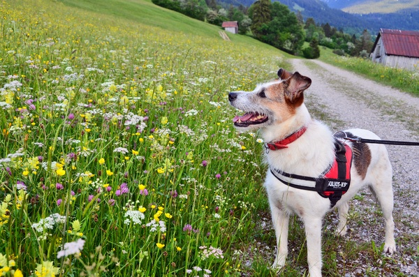 Bella loves the flower meadow