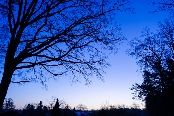 blue hour trees