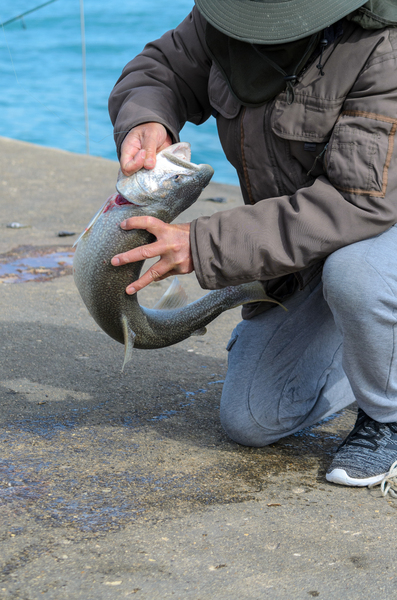 Fishing on a Sunday Morning: A man just caught a Coho Salmon off a Great Lakes pier
