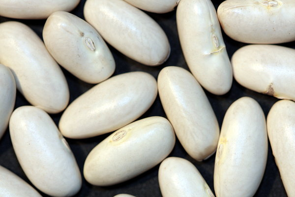 Food texture: White Beans