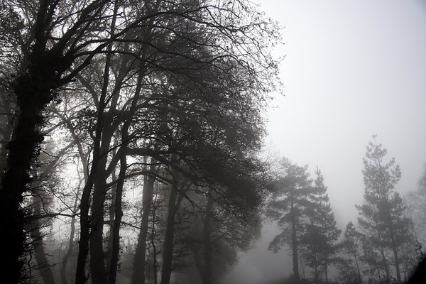 Foggy wood 3