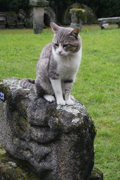 Cat and romanic ruins: A beautiful cat, guardian of anthropologist museum in Guimaraes, Portugal, EU. His name is Oscar