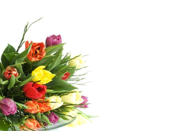 flowers: flower bouquet  with lots of copyspace