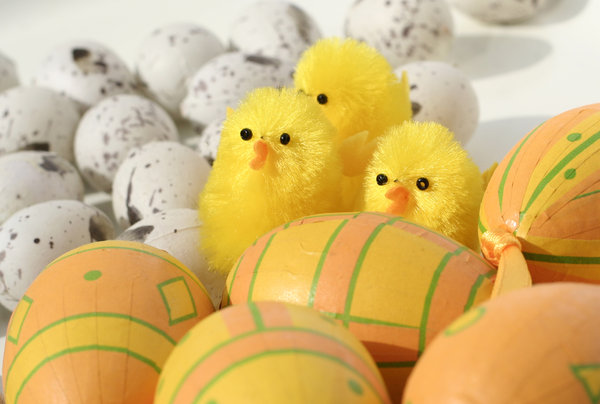 easter eggs and little chicks