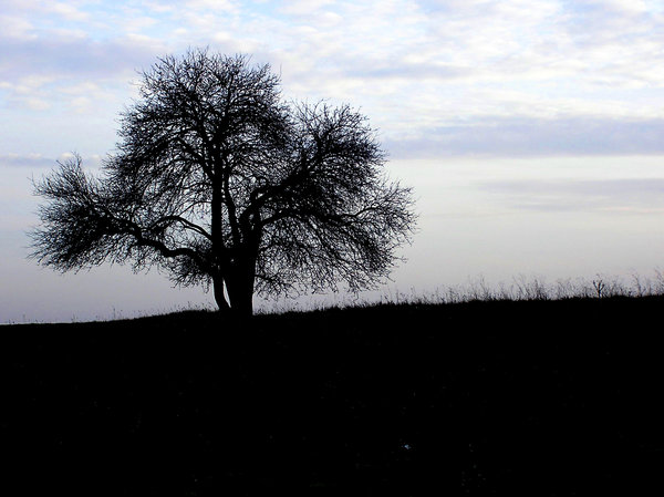 Loneliness: Lonely tree in the morning.Please mail me if you found it useful. Just to let me know!I would be extremely happy to see the final work even if you think it is nothing special! For me it is (and for my portfolio)!