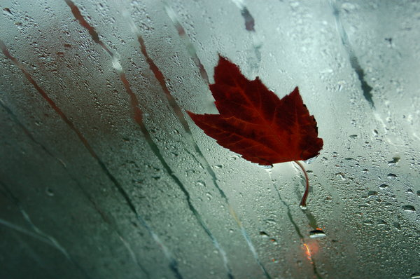 Maple leaf on windshield: A picture of a maple leaf taken from inside a parked car.