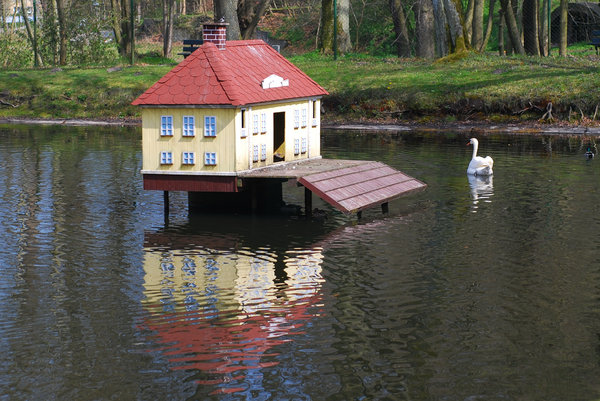 Swan and his house 1: Sawan guarding the house on the pond in the city park