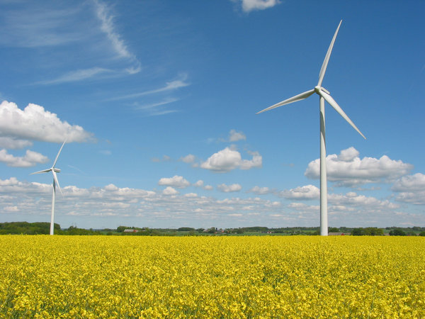 wind mills and yellow field 3