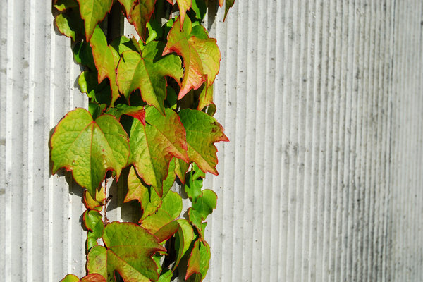 Wall and Plant 2