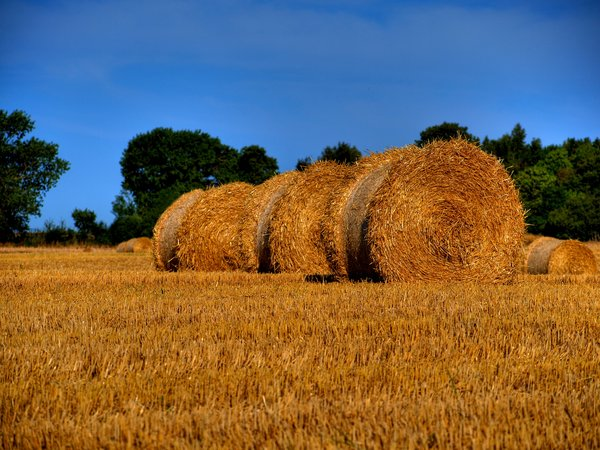 Hay rolls - HDR: The picture is HDR derived from 3 pictures