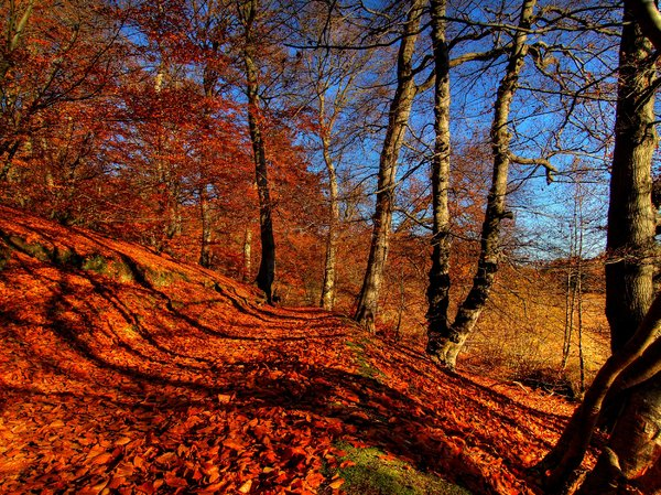 Autumn forrrest - HDR
