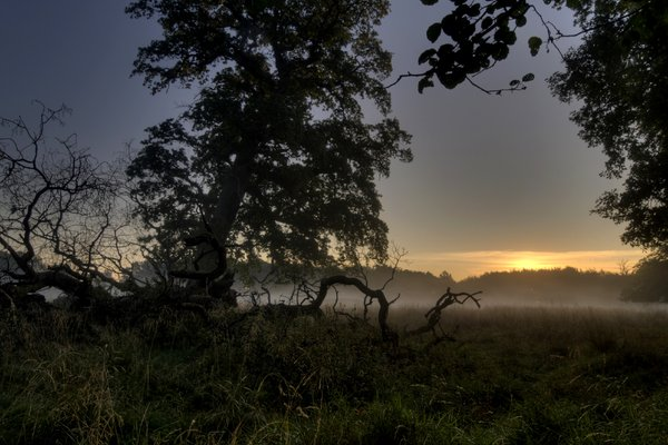 Misty morning-  HDR