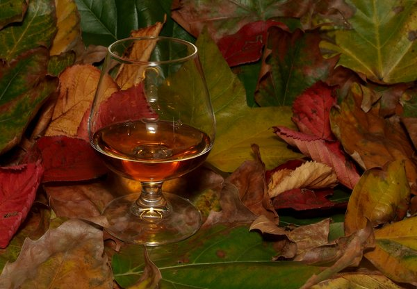 Autumn Cognac