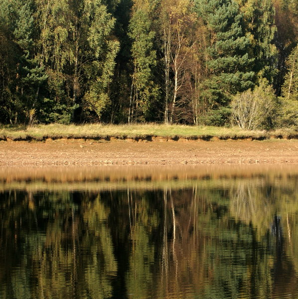 Mirror Trees: Crop of tree line reflected in water