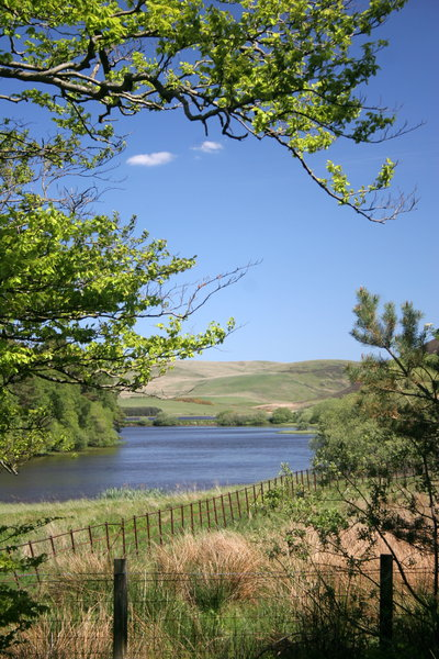 Lake View: View of a lake/reservoir through trees