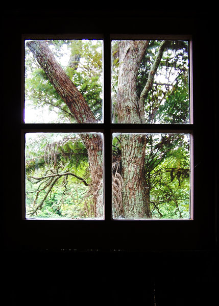 Tree out the shack window: Looking out an abandoned farm cottage window.