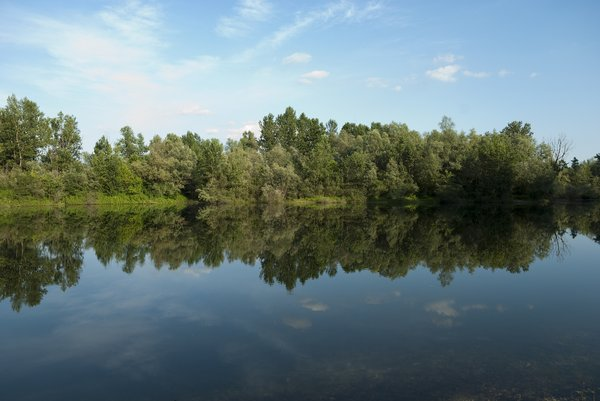 Easy reflection: Calm spring scene. Treeline reflecting in a lake