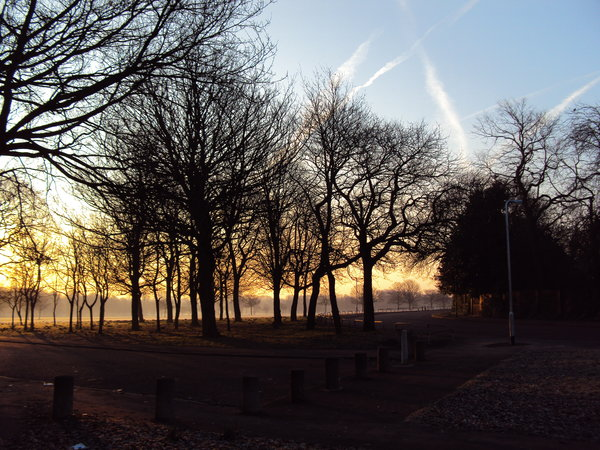 Dawn in Newsham Park: The dawn sun shiining through the tree silhouettes of Newsham Park Liverpool