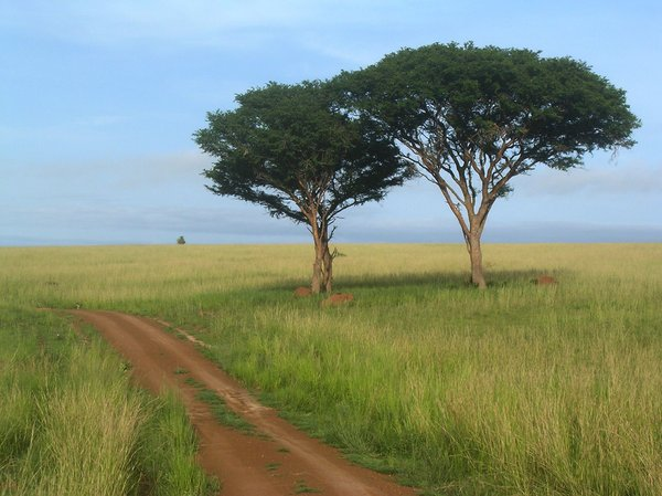 tree couple: photo taken in Uganda
