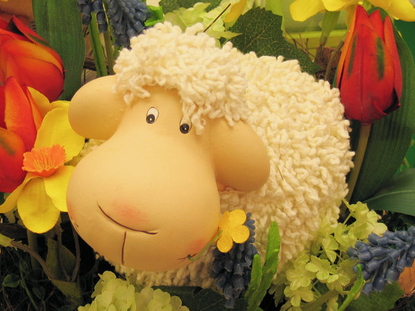 sheep in flowerbed: sheep in flowerbed