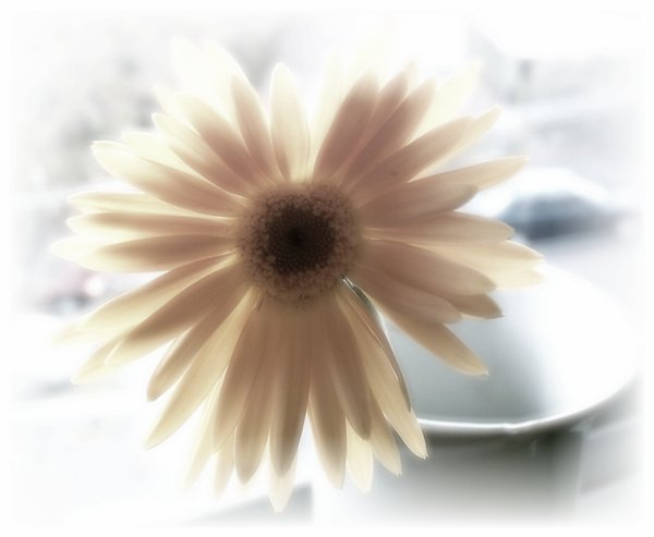 Happiness - Gerbera 2