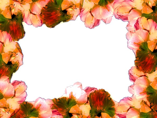Flower Border: Floral border on blank page. Lots of copyspace. You may prefer: http://www.rgbstock.com/photo/dKTnON/Floral+Border+42  or  http://www.rgbstock.com/photo/2dyVEfh/Floral+Border+10