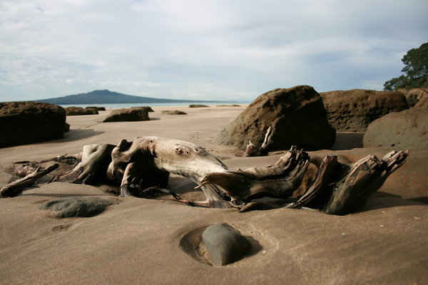 Driftwood 1: Taken on the north shore of Auckland. July 14th, 2007.