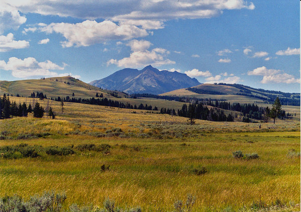 Green plains: Green plains in Yellowstone National Park