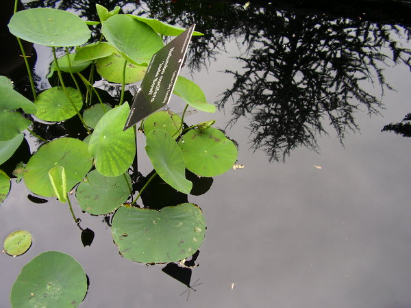 water gardens 4: A day at the Denver Botanic Gardens. Late summer, 07.