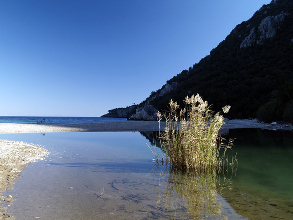 Reeds in Olympos: Small lagoon with reeds at the beach in Olympos/Antalya/Turkey