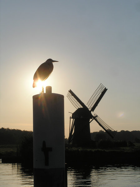 Windmill: Somewhere in Holland
