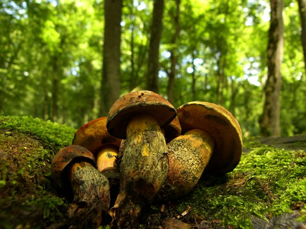 Mushrooms: Dont eat thisNature park Lonjsko polje Croatiahttp://www.lonjsko-polje. ..