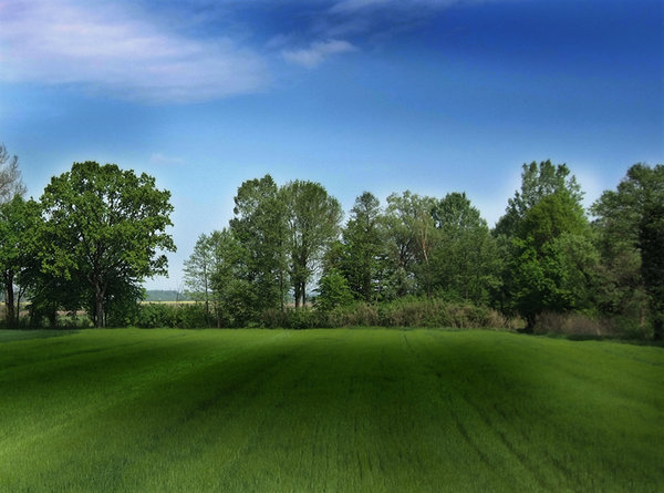 Green field: More picture like this on http://lonjsko-polje.com