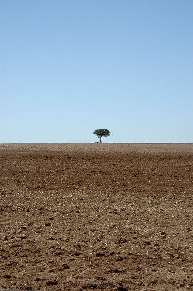 The lonliest tree