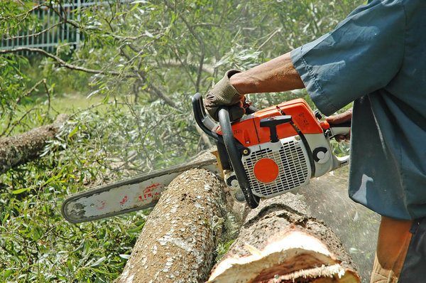 Chainsaws in action. 1
