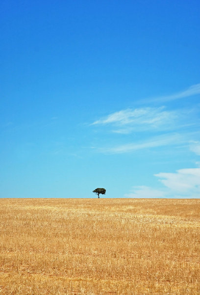 Lonliest Tree II 2